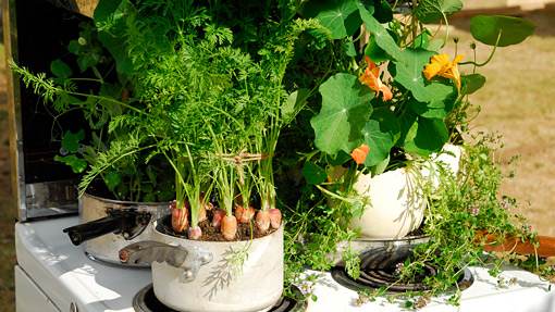 Veggies in containers - Soil for container vegetable gardening ...
